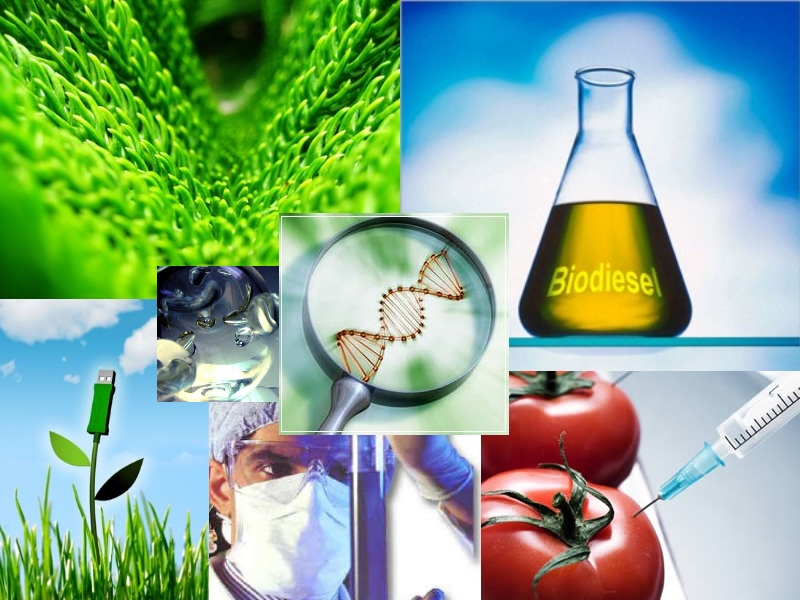 vectors used in biotechnology Vectors are carriers the dynamic tools in genetic engineering by: they are the most vitally used belongings used in biotechnology.